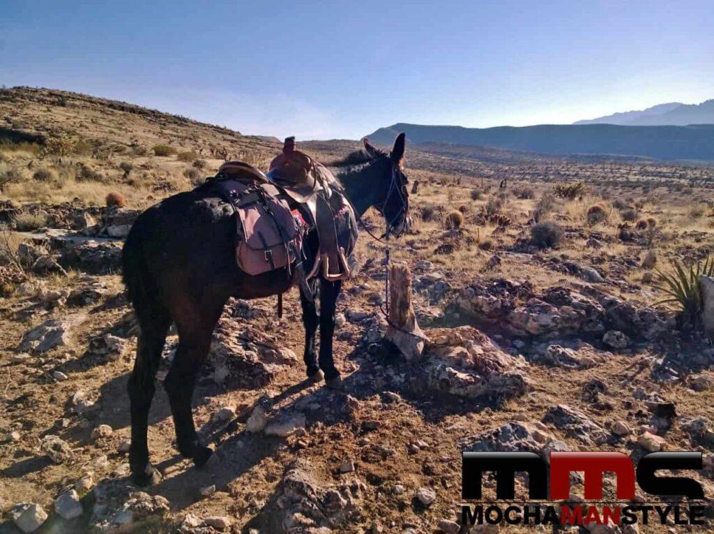 horseback riding in vegas